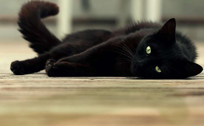 El gato negro   El Diario del Centro del País